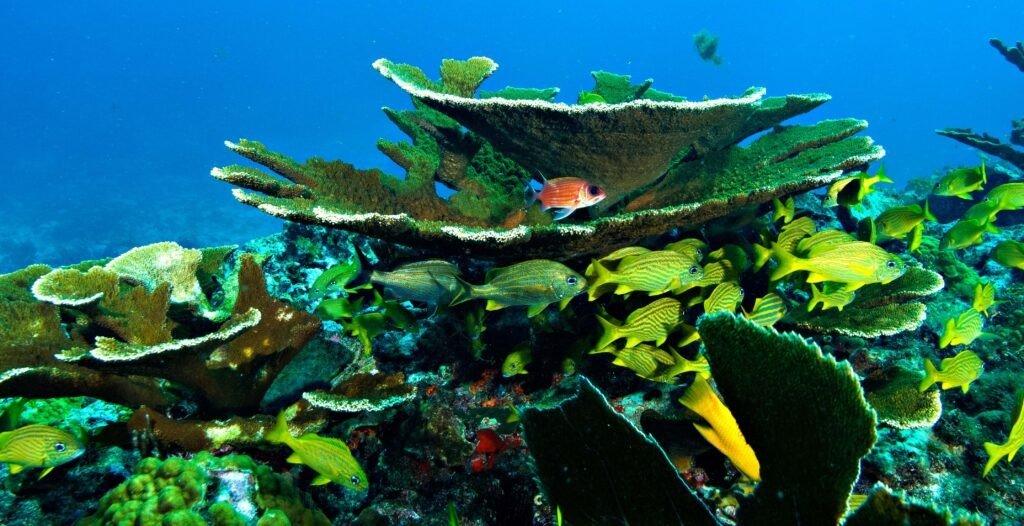 Cozumel Palancar Reef 1