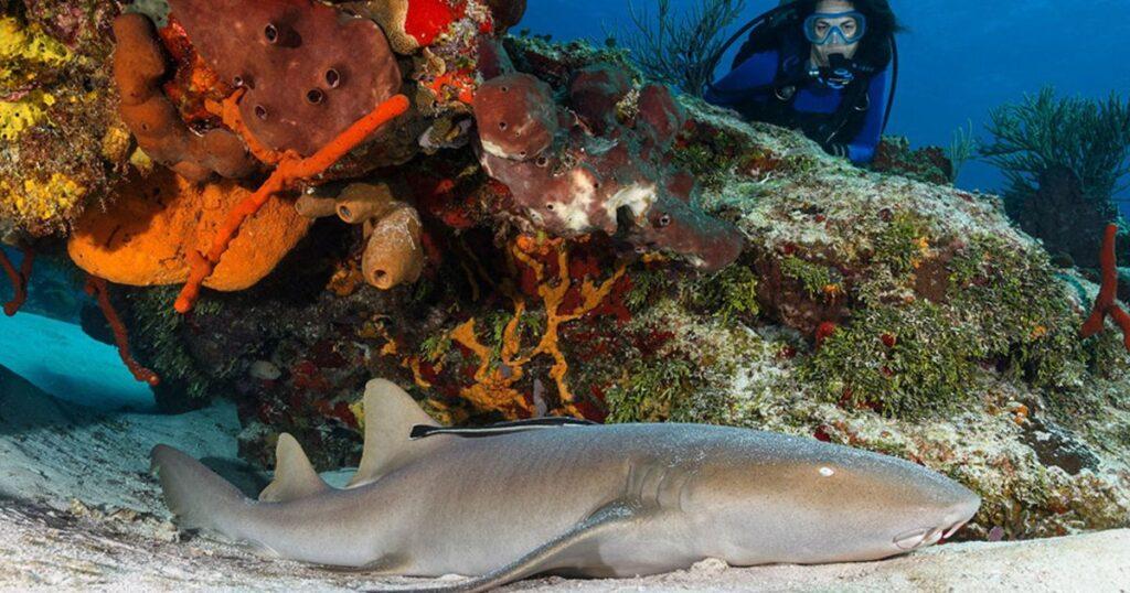 cozumel photographer nurse shark brandon cole 1