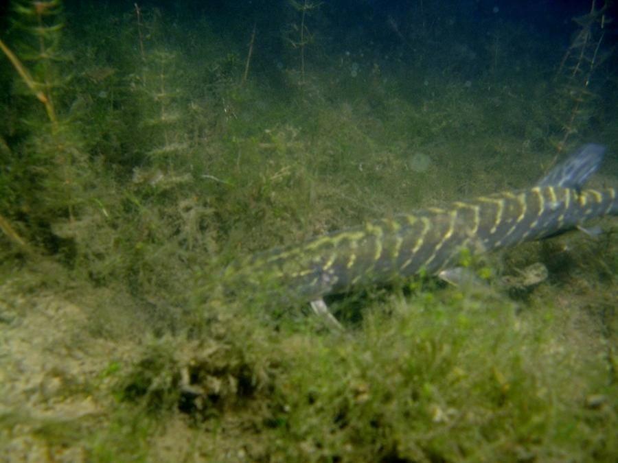 krokodyle0005 12