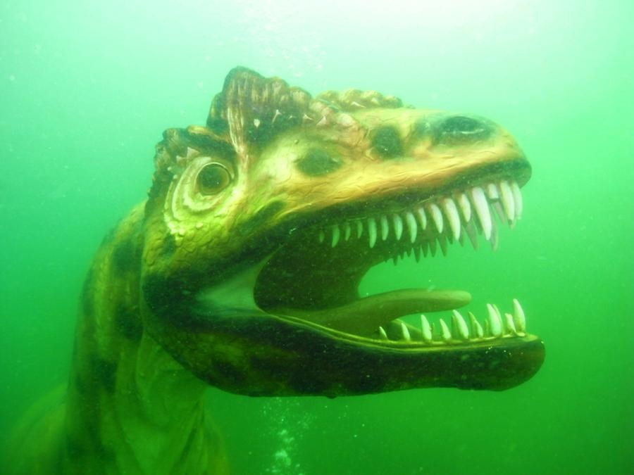 krokodyle0005 121