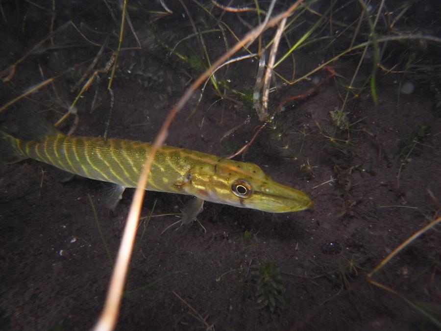 krokodyle0025 43