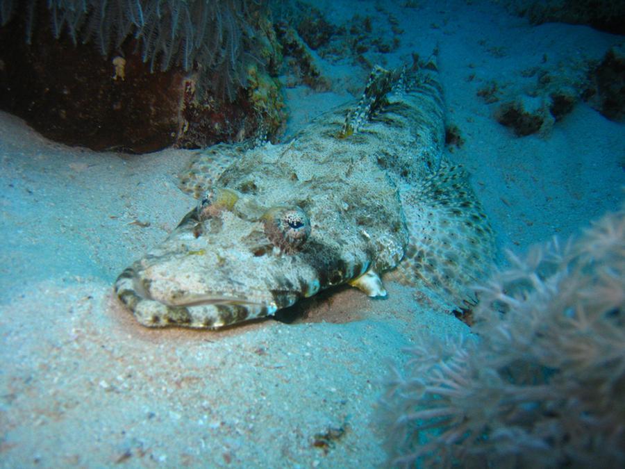krokodyle0027 50