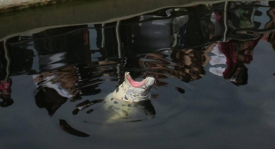 krokodyle0027 71