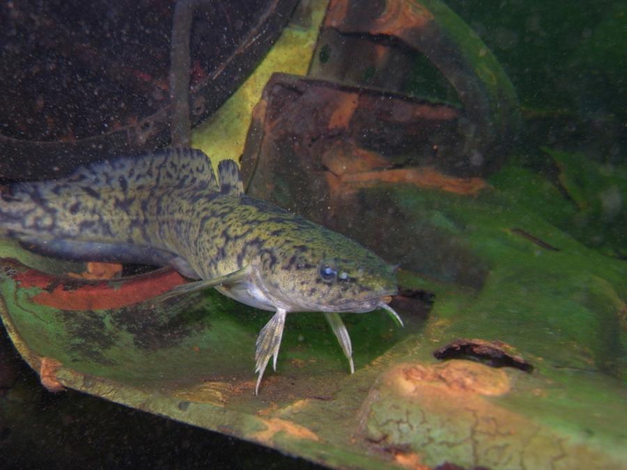 krokodyle0037 27