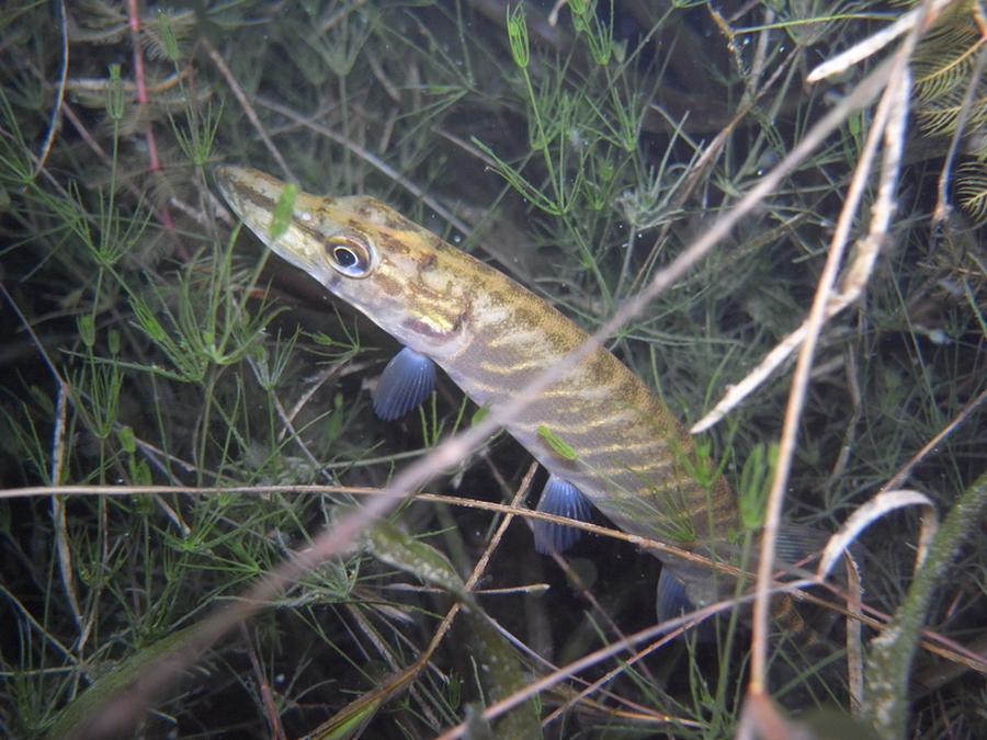 krokodyle0039 29