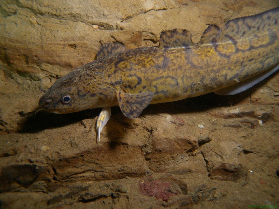 krokodyle0041 23