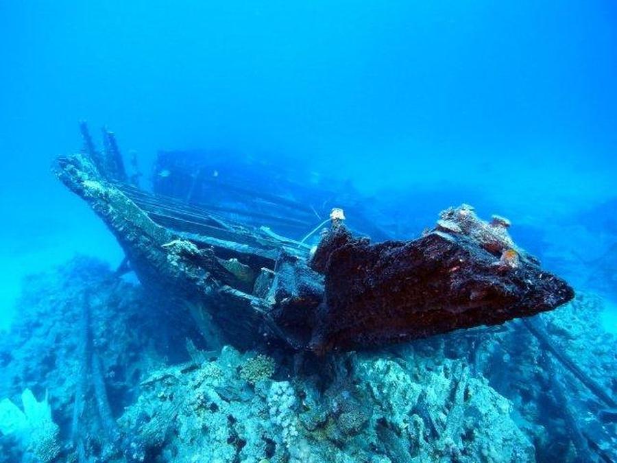 krokodyle0041 39