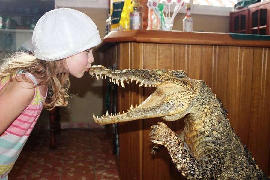 krokodyle0107 5