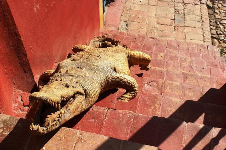 krokodyle0123 3
