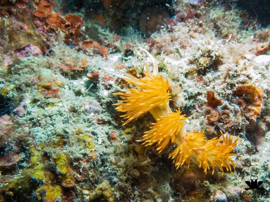 underwater 60
