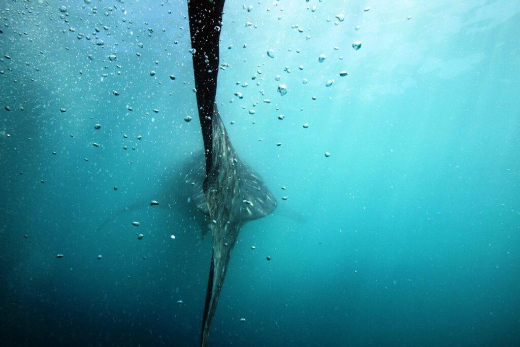 wielorybi 3